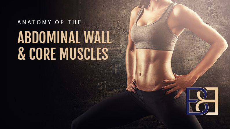 Anatomy of the Abdominal Wall and Core Muscles
